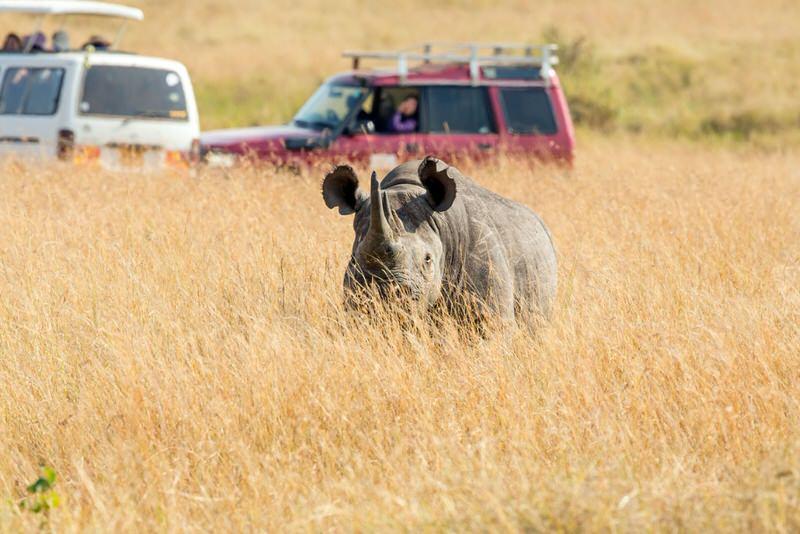 Rhino and 4x4